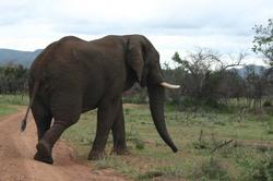 Elephant chase.jpg