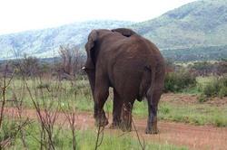 Elephant in Road.jpg