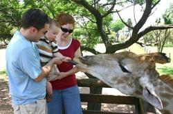 Feeding the Giraffe.jpg