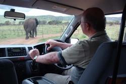 Following an Elephant.jpg
